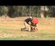 Brandy - Personal Protection Dog Training - Eastwind Academy