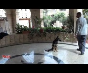 German Shepherd k9 training