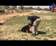 Zoro Puppy pre-schooling tranning