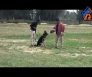 Roy - Personal Protection Dog Training - Eastwind Academy