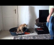 how to train a puppy- Golden