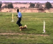 Agility course - eastwind academy