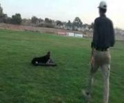 Roy - Companion Dog Training - Eastwind Training