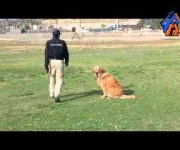 Sunshin Companion Dog Tranning - Eastwind Academy