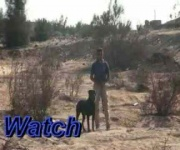 Jerry - Personal Protection Dog Training - Eastwind Academy